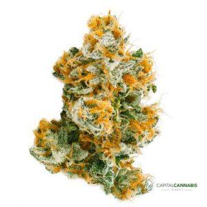 WHITE WIDOW - 5 Grams of marijuana